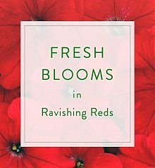 Flower Bouquets: Designer's Choice Seasonal Bouquet: Red